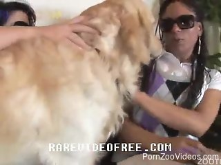 Babes in sunglasses are fucking with dog in bestiality threesome